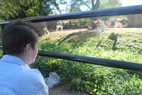 Art Students Travel to Zoo